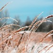 Frozen Vegetation — Stockfoto
