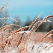 Foto de Stock  : Frozen Vegetation