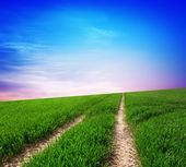Grön kulle — Stockfoto