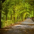 Beautiful park alley in autumn — Stock Photo #31956121