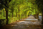 Beautiful park alley in autumn — Stock Photo