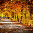 Autumnal alley in the park — Stock Photo #32412641