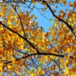 Autumn trees in forest — Stock Photo