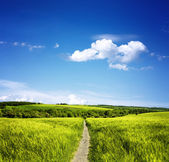 Path through the meadows — Stock Photo