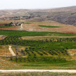 Stock Photo: Holy Land landscape