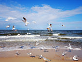 Seagulls over the sea waves — Stock Photo
