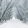 Snow forest alley — Stock Photo