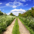 Spring green path — Stock Photo