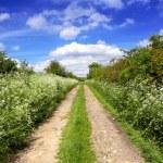 Spring green path — Stock Photo
