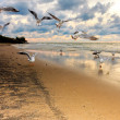 Seagulls flying over the beach at sunset — Stock Photo #3748161
