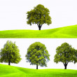 Stock Photo: Nature tree background