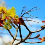 Spring time — Stock Photo #4734632
