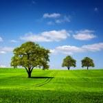 Green nature landscape — Stock Photo #49749335