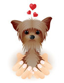Yorkshire Terrier in love. — Stock vektor