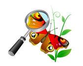 Farfalla. — Vettoriale Stock