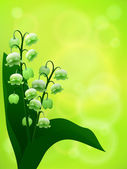 Lily of the valley — Stock Vector