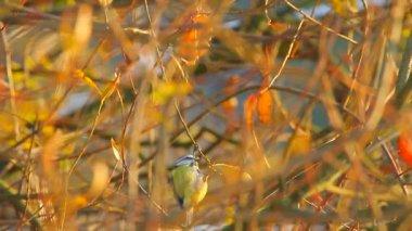 Aves silvestres — Vídeo de Stock
