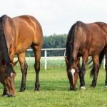 Horse — Stock Photo #14810467