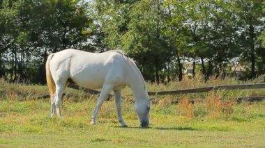 Horses grazing — Stock Video