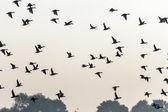Many birds flying in the sky — Stock Photo
