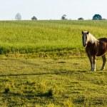 Horse — Stock Photo #20530921