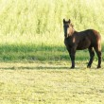 Horse — Stock Photo #20530923