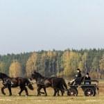 Horse — Stock Photo #20530929