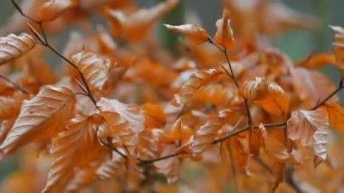Bitkiler doğal arka planı için — Stok video