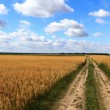 Agricultural field — Stock Photo #26294337