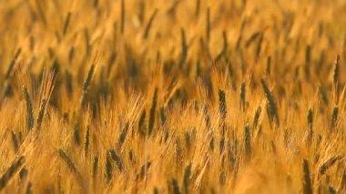 Meadow in the field — Stock Video