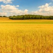 Agricultural field — Stock Photo #28739387