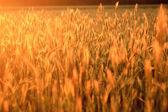 Campo agricolo — Foto Stock