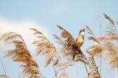 Bird — Stock Photo