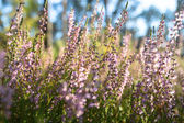 野生植物 — 图库照片