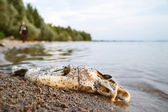Dead fish — Stock Photo