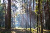Foresta — Foto Stock