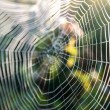 Spider web — Foto Stock #31909739