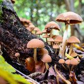 蘑菇 — 图库照片