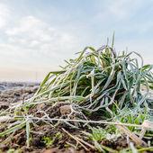 Planta silvestre — Foto de Stock