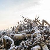 野生の植物 — ストック写真