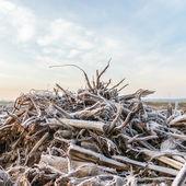 Pianta selvatica — Foto Stock