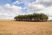 Ağaçlar — Stok fotoğraf