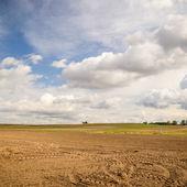 Campo agrícola — Foto de Stock