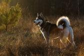 Funny dog — Stock Photo