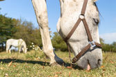 Pferde in einem Feld — Stockfoto