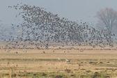 Many birds — Stock Photo