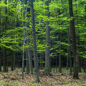 Young grey forest — Stock Photo