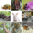 Animal  theme photo collage composed of few images - Stock Photo