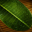 Close up view of fresh green leafs — Stock Photo #15710855
