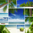 Tropic mix — Foto Stock